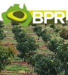 Log into the BPR