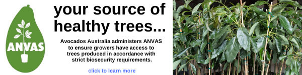 Avocados Australia administers ANVAS so growers have access to healthy avocado trees